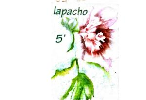 Infusion Lapacho